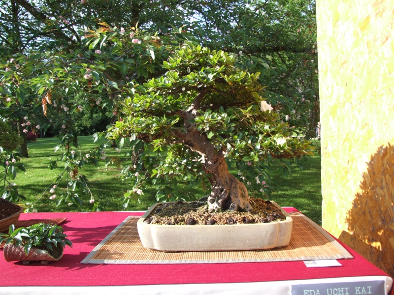 EUK @ Japanse tuin Hasselt 02-06-2012 086
