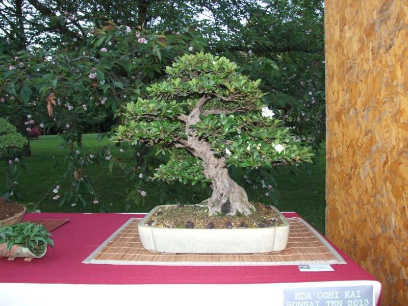 EUK @ Japanse tuin Hasselt 02-06-2012 114