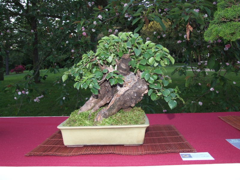 EUK @ Japanse tuin Hasselt 02-06-2012 116
