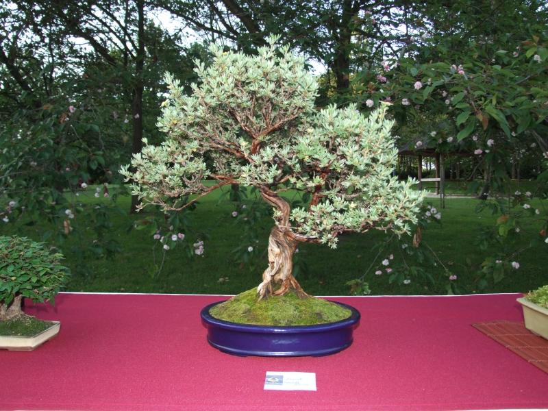 EUK @ Japanse tuin Hasselt 02-06-2012 117