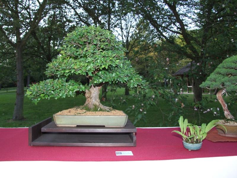 EUK @ Japanse tuin Hasselt 02-06-2012 121