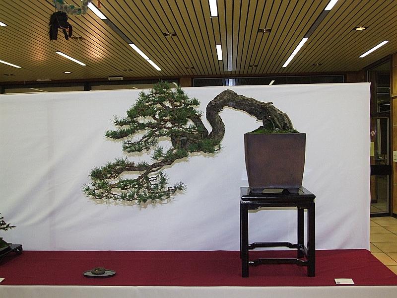 EUK Pinus Jef Byloos 3