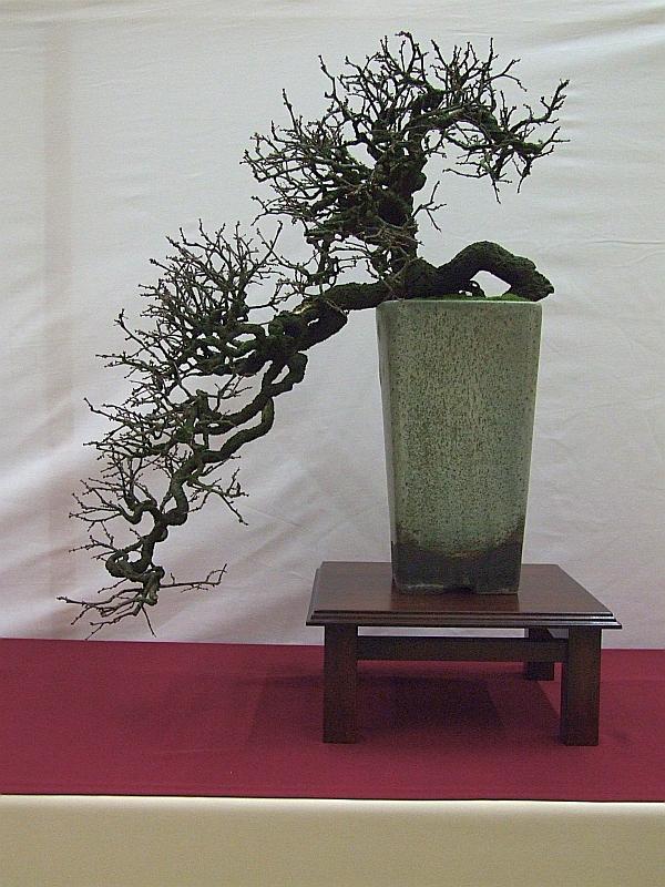 EUK Prunus spinosa Lydie 3