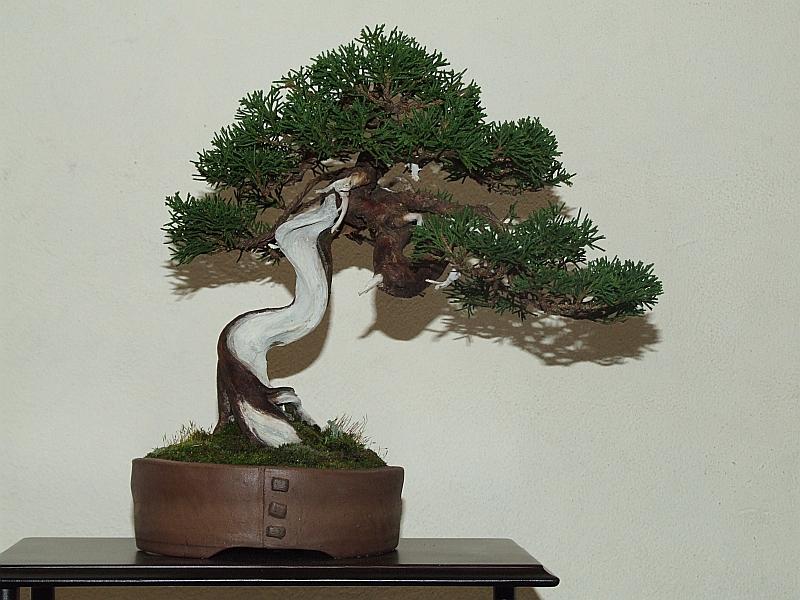 EUK Shohin Juniperus Hans 9