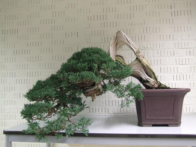 Juniperus Danny Vernelen