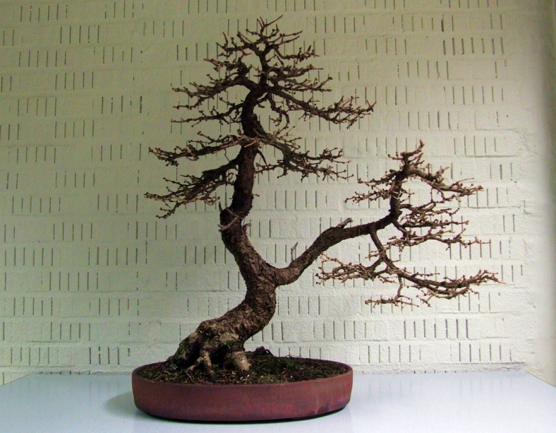 Larix Willy van de Ven