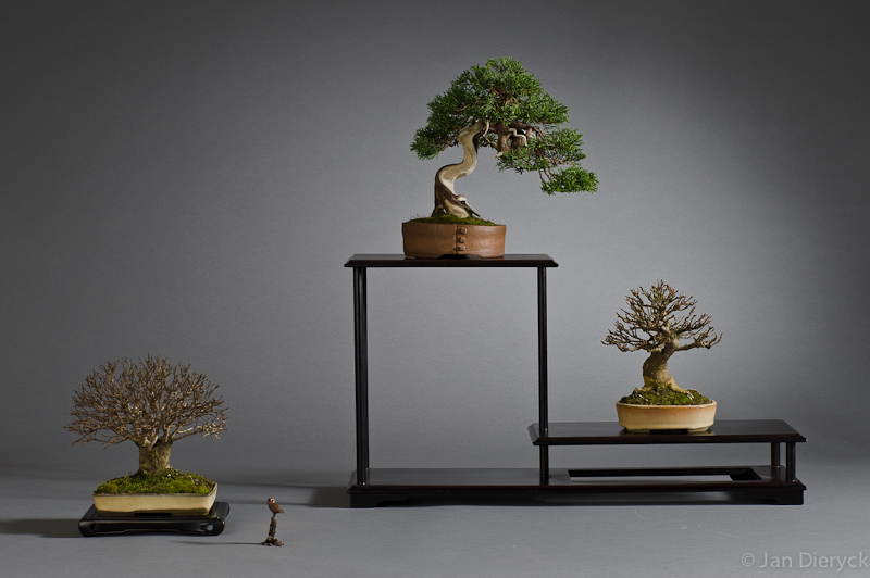 Shohin display - Hans Vleugels