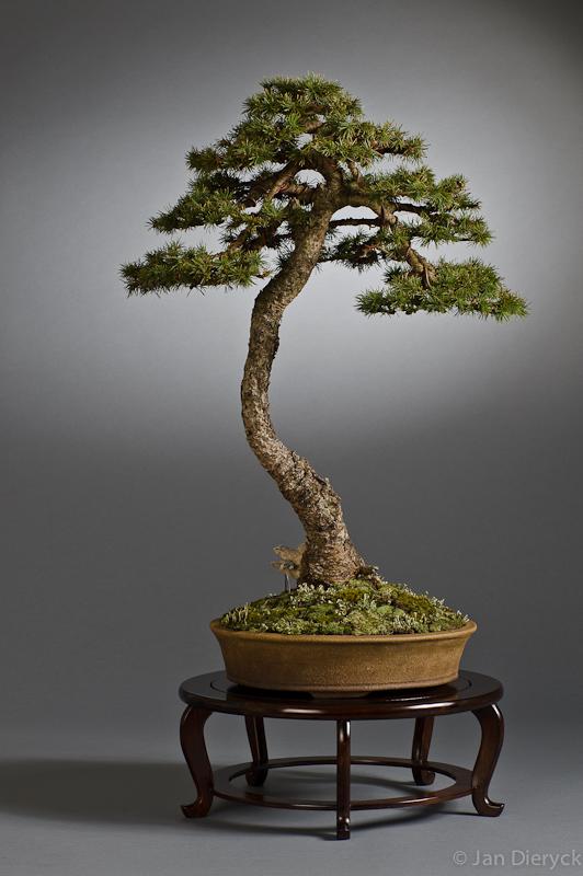 Pinus - Marinko Beg