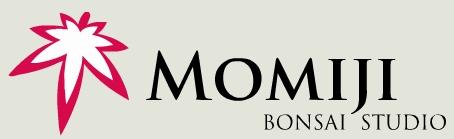 logo-momiji