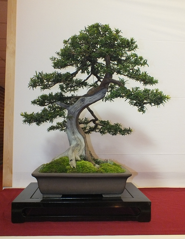 EUK Bonsai Ten 2013 001b