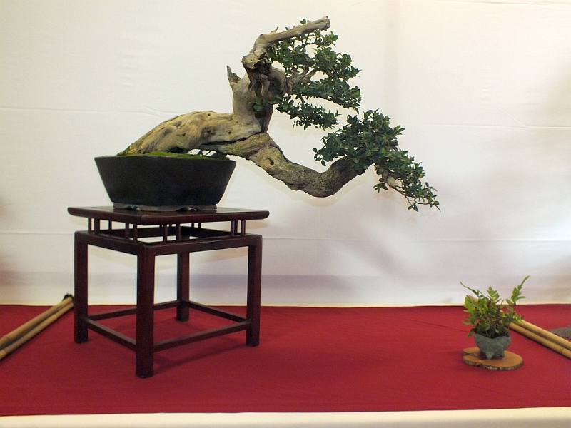 EUK Bonsai Ten 2013 002aa