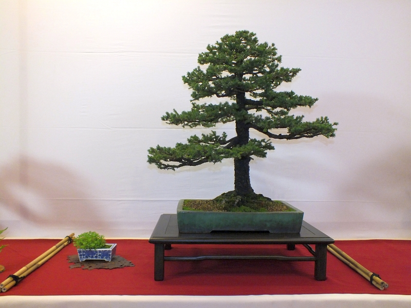 EUK Bonsai Ten 2013 003a