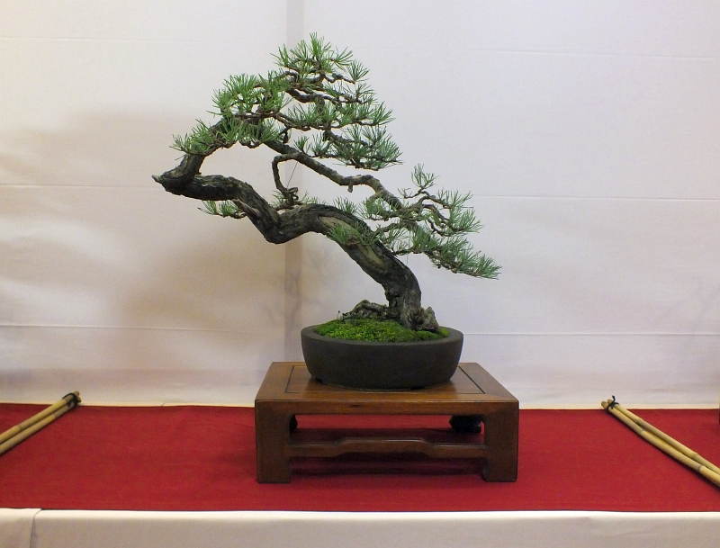 EUK Bonsai Ten 2013 004a