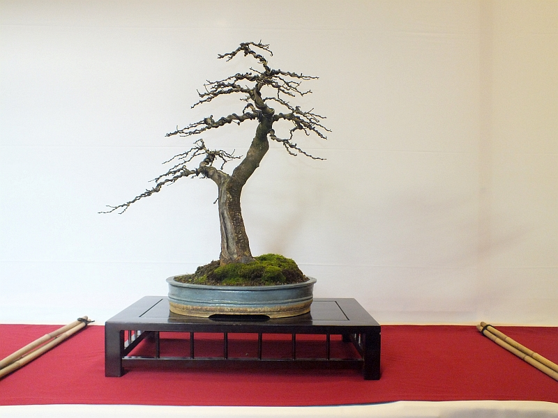 EUK Bonsai Ten 2013 005c