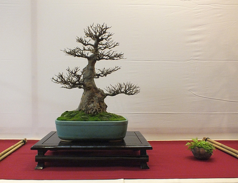 EUK Bonsai Ten 2013 006a