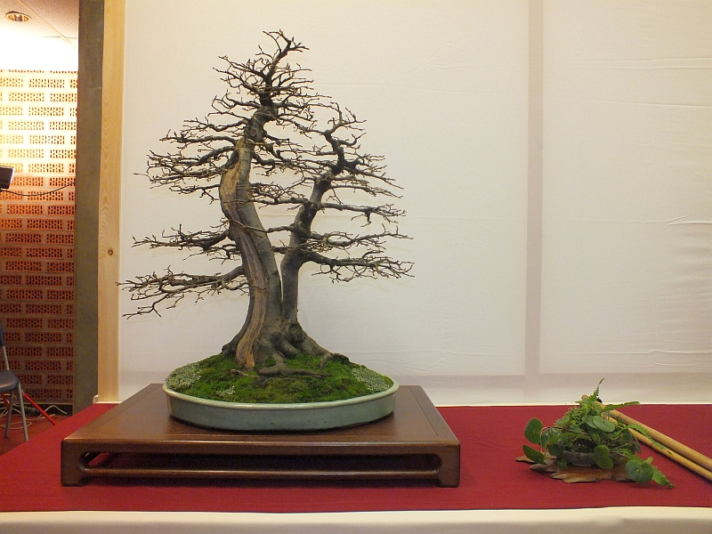 EUK Bonsai Ten 2013 009c