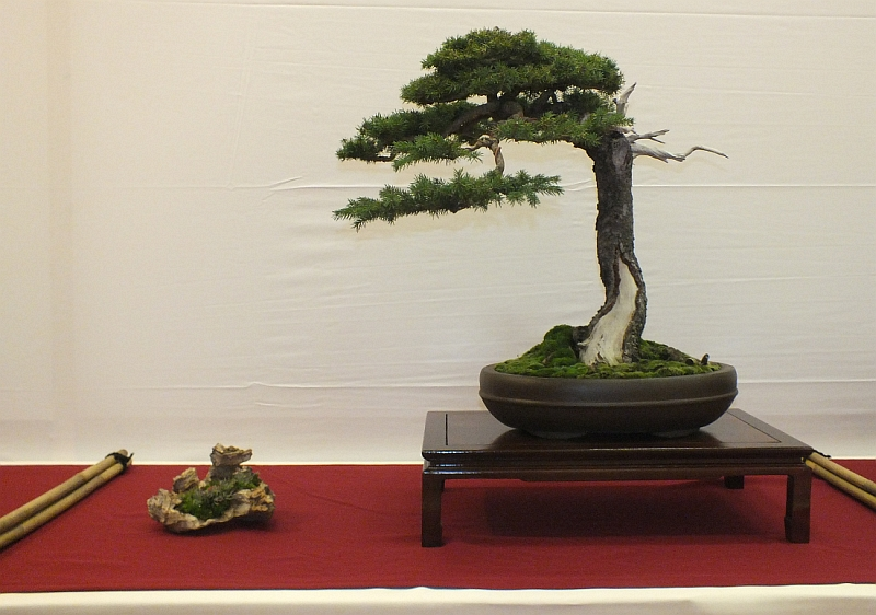 EUK Bonsai Ten 2013 010a