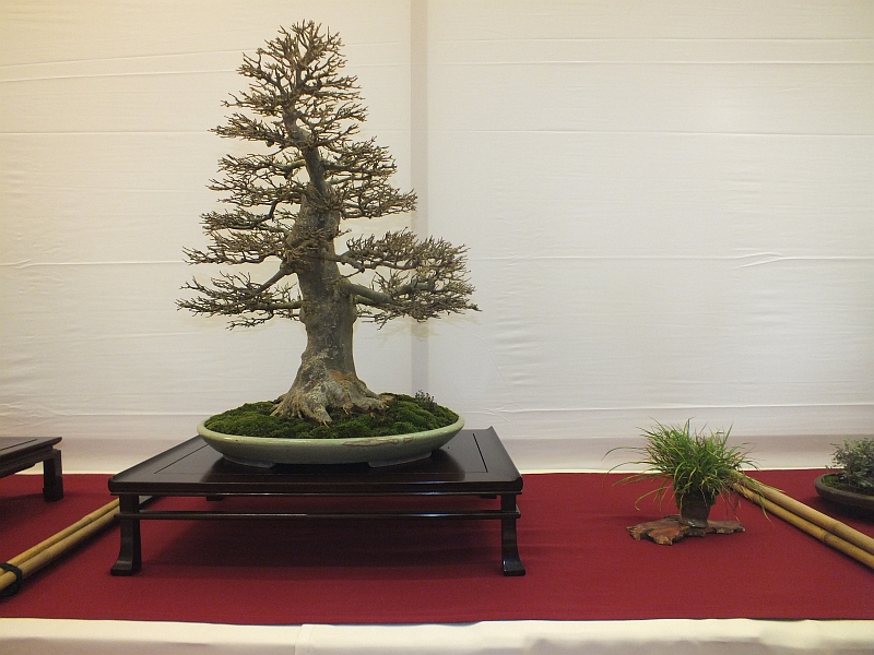 EUK Bonsai Ten 2013 011c