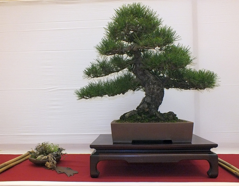 EUK Bonsai Ten 2013 012A