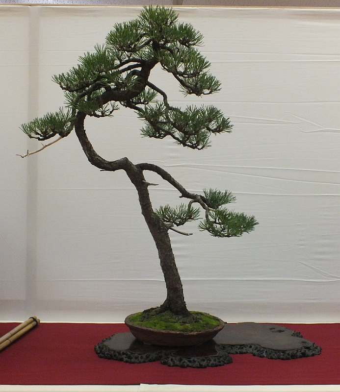 EUK Bonsai Ten 2013 013b