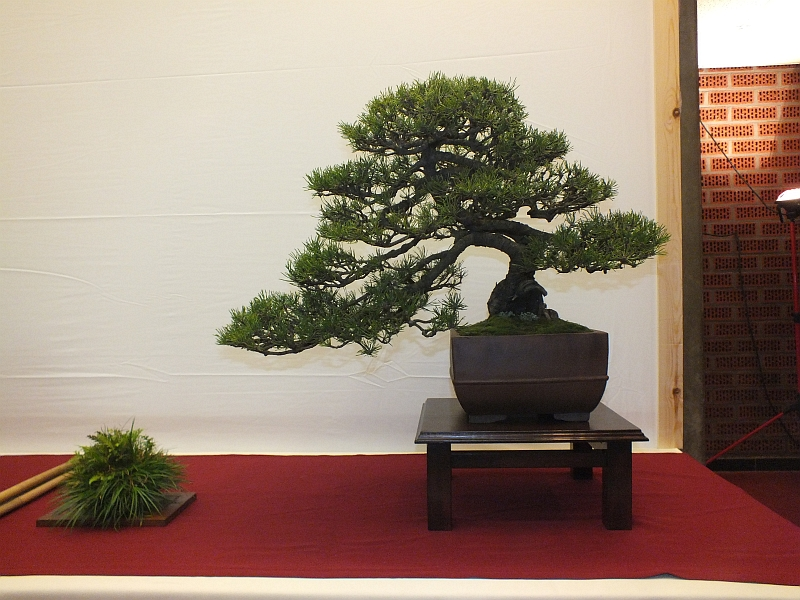 EUK Bonsai Ten 2013 015b