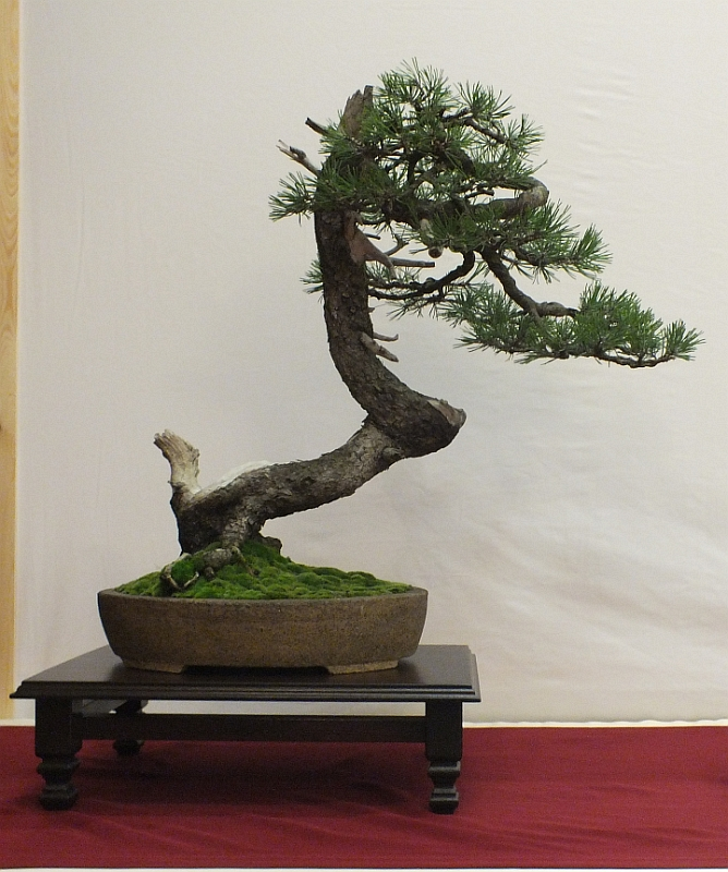 EUK Bonsai Ten 2013 016b