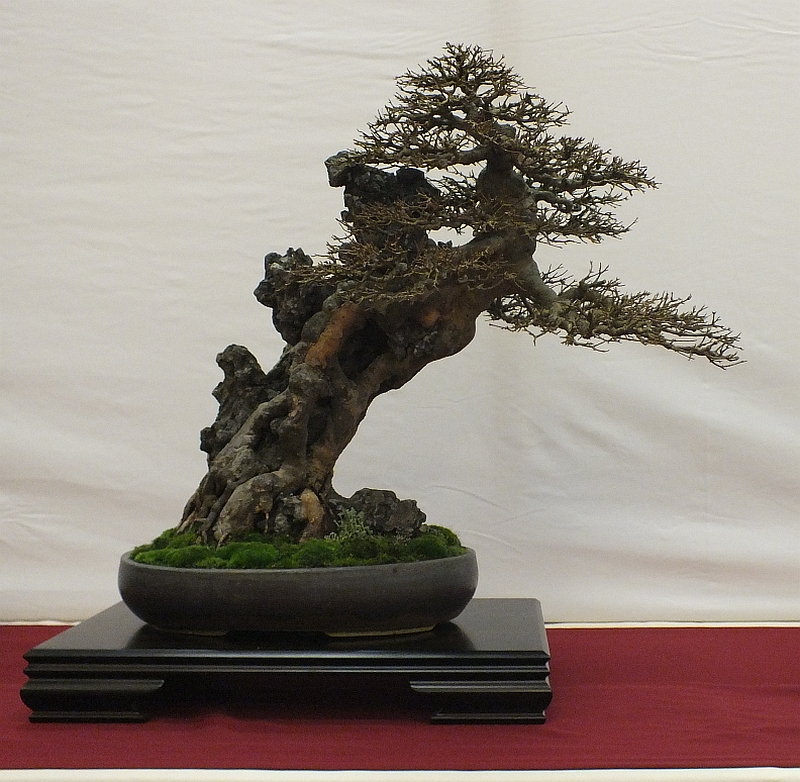 EUK Bonsai Ten 2013 017c