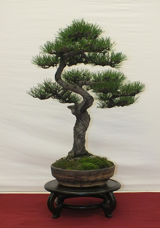 EUK Bonsai Ten 2013 018B