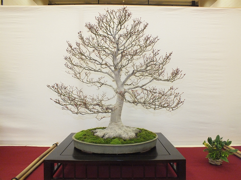 EUK Bonsai Ten 2013 019d