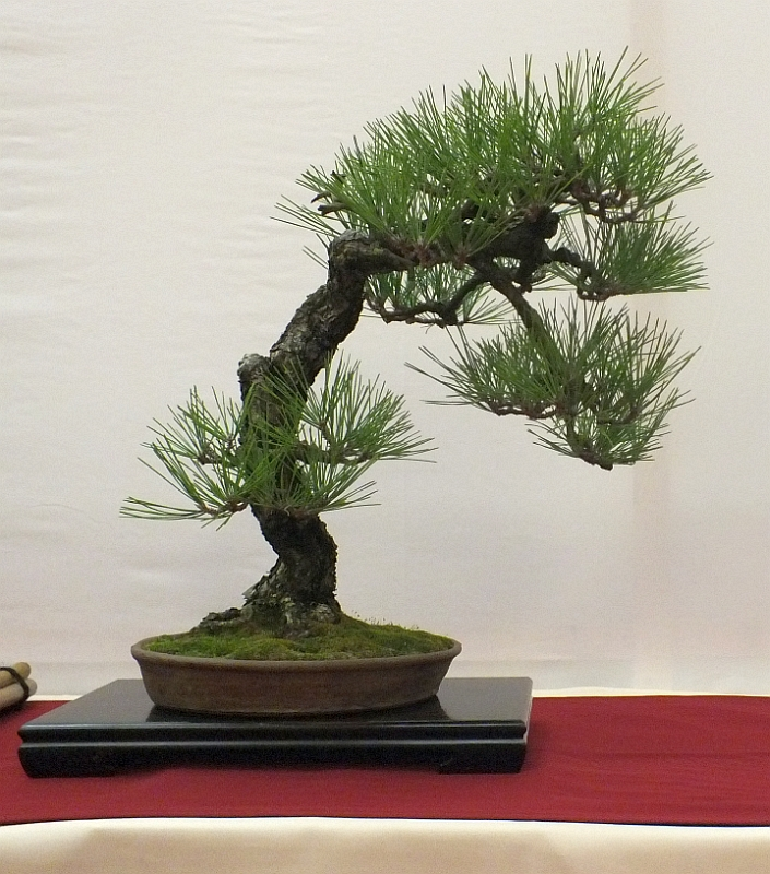 EUK Bonsai Ten 2013 020b