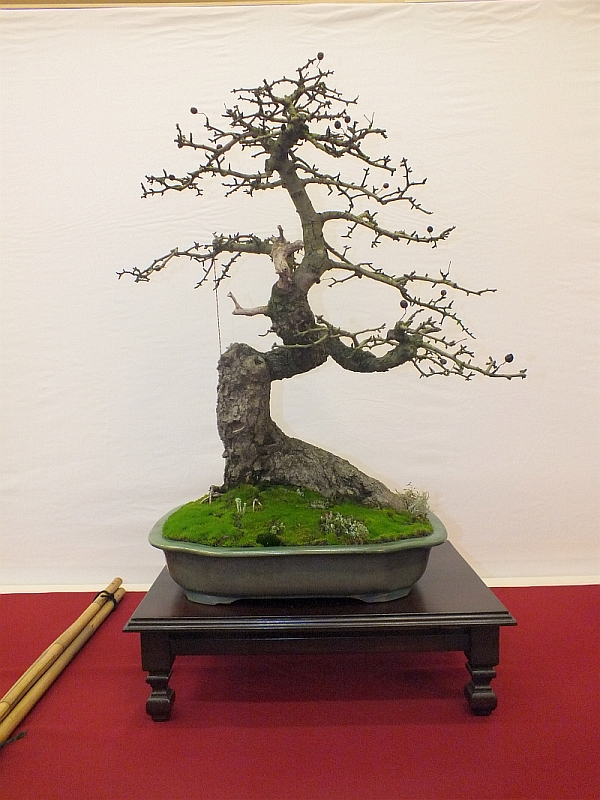 EUK Bonsai Ten 2013 021d