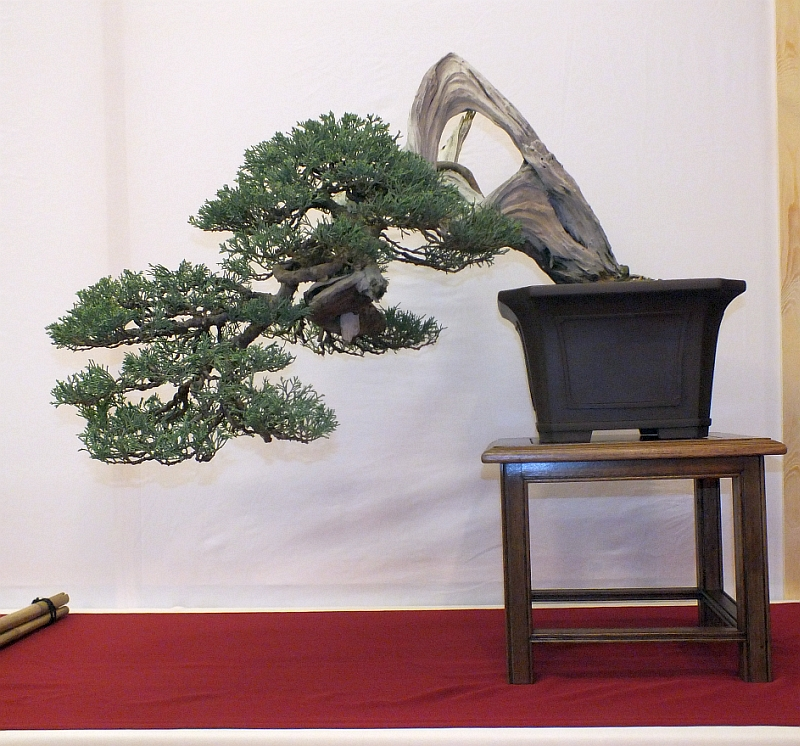EUK Bonsai Ten 2013 022a