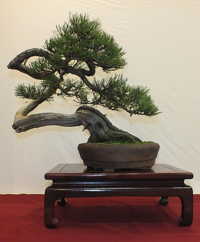 EUK Bonsai Ten 2013 023b