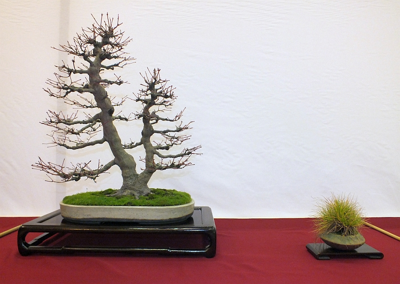 EUK Bonsai Ten 2013 024a