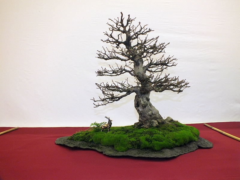 EUK Bonsai Ten 2013 027ca