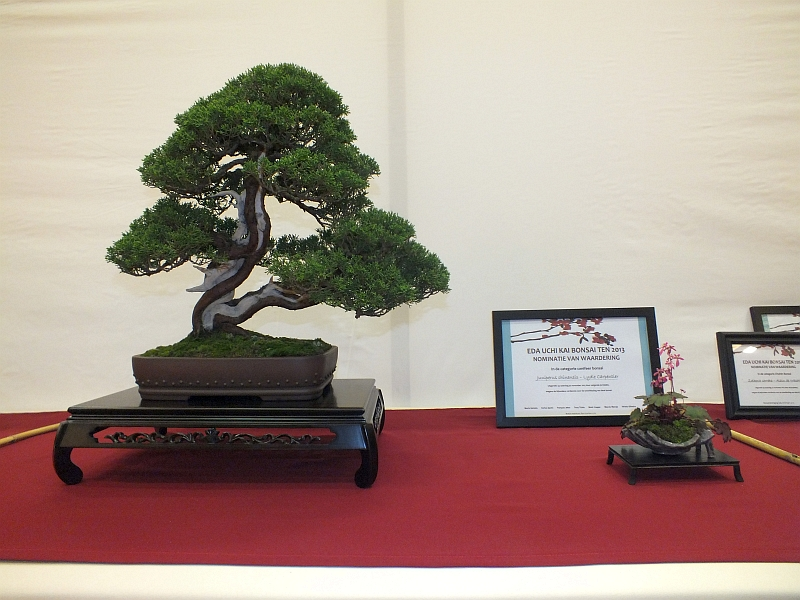 EUK Bonsai Ten 2013 028d