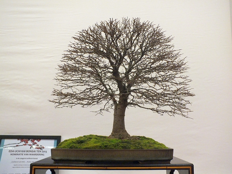 EUK Bonsai Ten 2013 029d