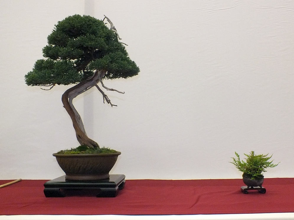 EUK Bonsai Ten 2013 030a