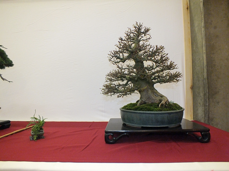 EUK Bonsai Ten 2013 031d