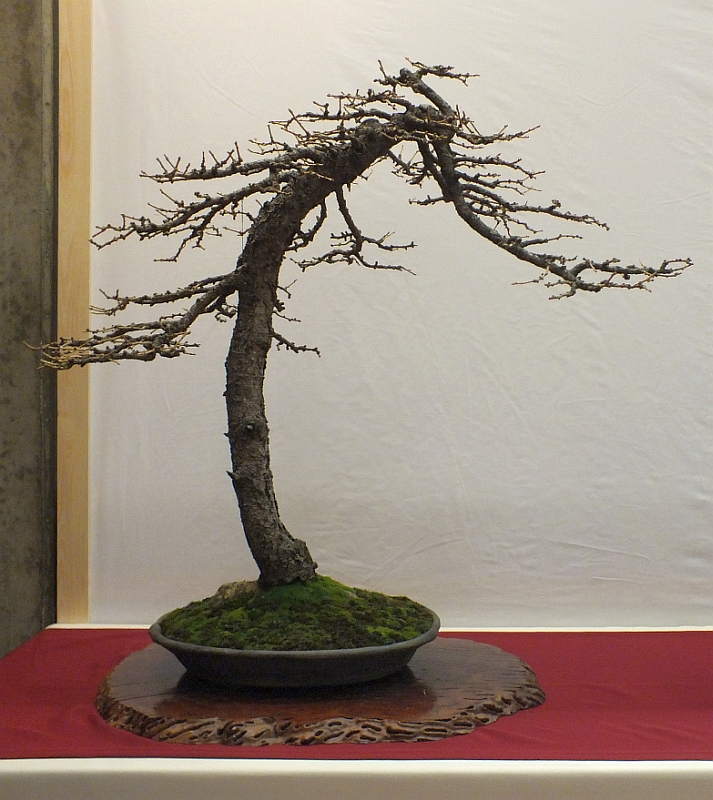 EUK Bonsai Ten 2013 032b