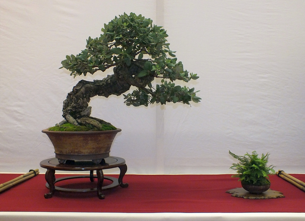 EUK Bonsai Ten 2013 033a