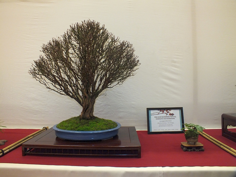 EUK Bonsai Ten 2013 034d