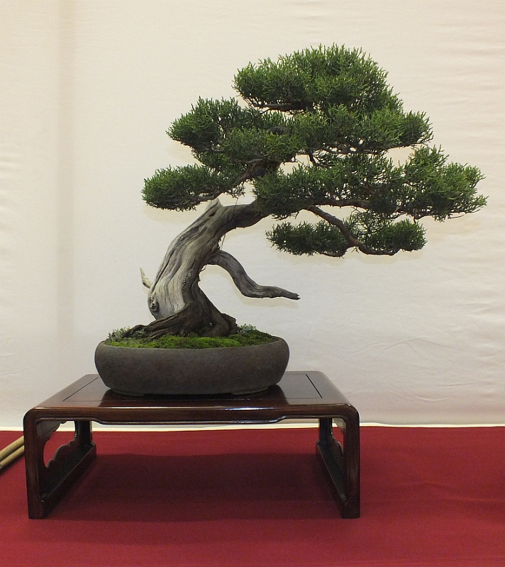 EUK Bonsai Ten 2013 035c