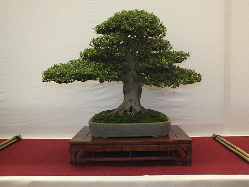 EUK Bonsai Ten 2013 037c
