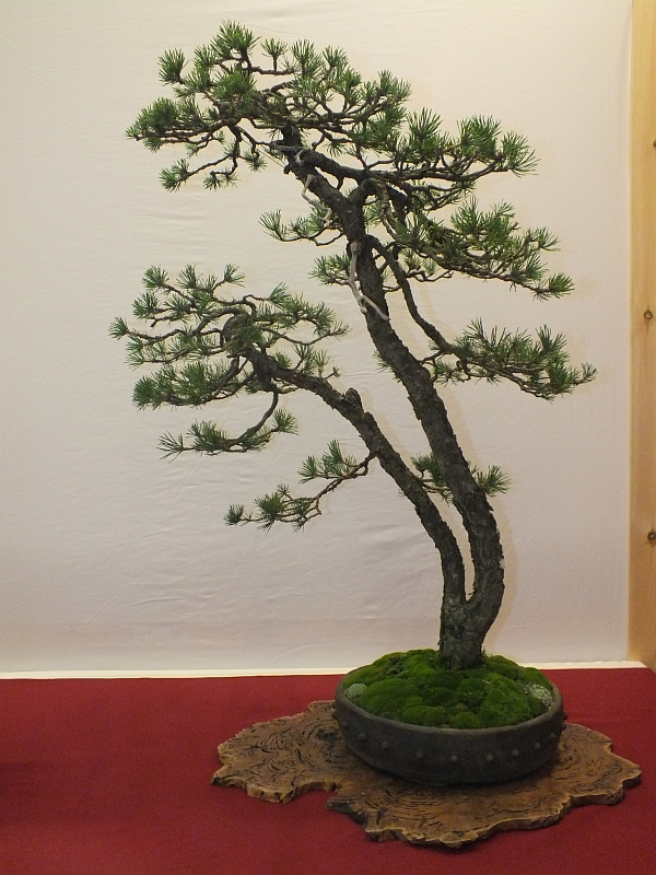 EUK Bonsai Ten 2013 038c