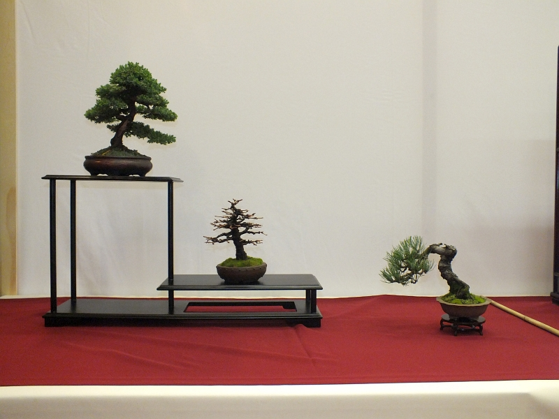 EUK Bonsai Ten 2013 039ab