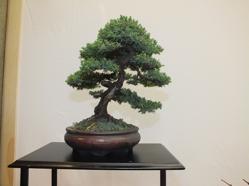 EUK Bonsai Ten 2013 039ba