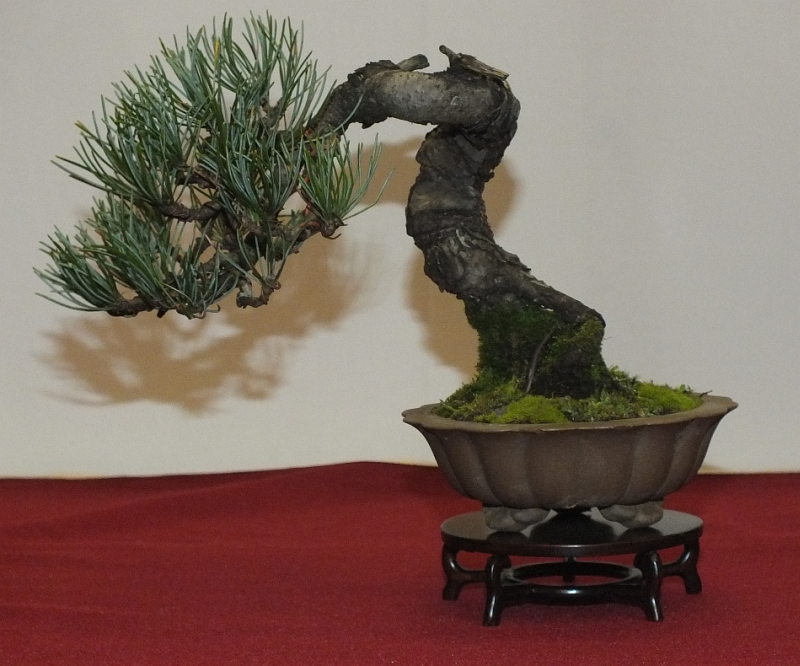 EUK Bonsai Ten 2013 039d