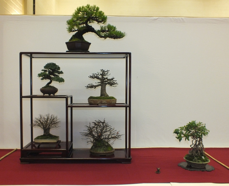 EUK Bonsai Ten 2013 040a