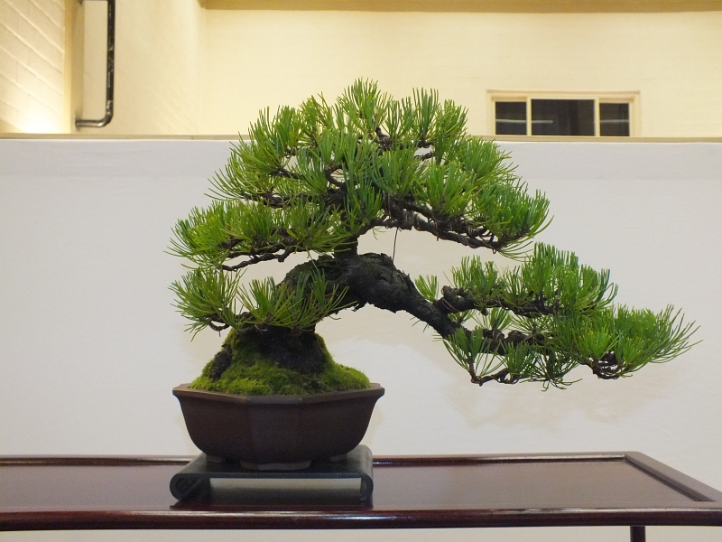 EUK Bonsai Ten 2013 040ba